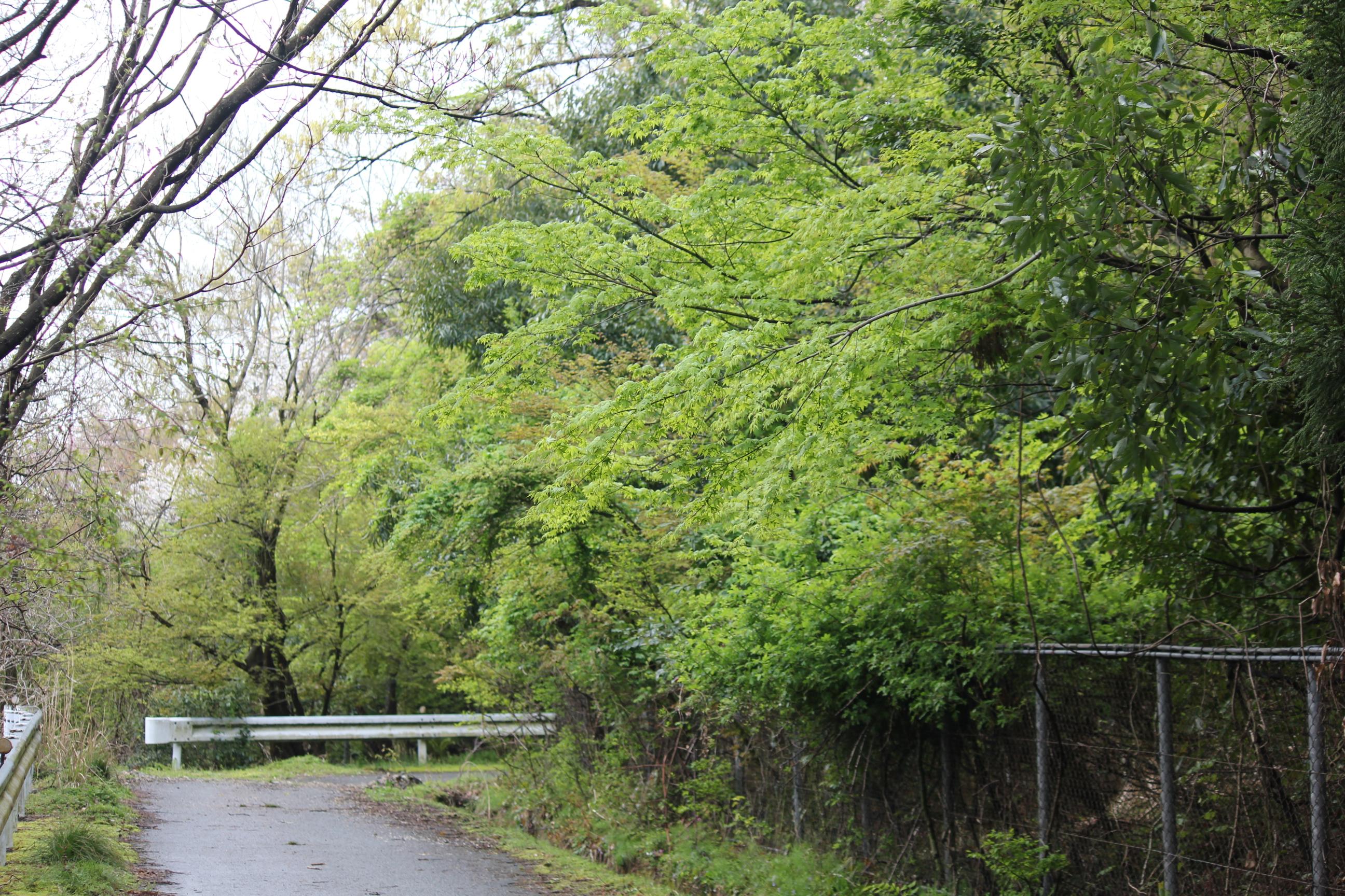 木戸風景、1200、春 (7)